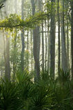 Forest. Trees and palm leaves in a tropical forest in the morning Stock Images