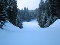 Forest. During winter in brenta dolomites Stock Images