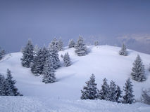 Forest. During winter in brenta dolomites Stock Image
