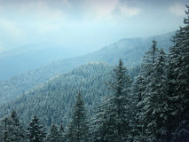 Forest. During winter in brenta dolomites Royalty Free Stock Photos