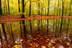 Forest. Lake in autumn colour Royalty Free Stock Photos