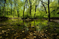 Forest. Spring in the forest by a river with stones in the water Royalty Free Stock Photo