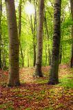 The forest Royalty Free Stock Photography
