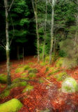 Forest. In the portuguese natural park Stock Image