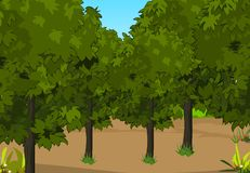 Forest. An illustration drawing is Forest Stock Photo