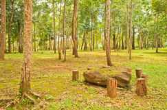 Forest. Morning tropical rainforest, Chaiyaphum Province, thailand stock photo