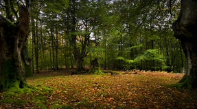 The forest Stock Image