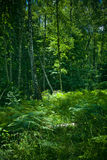 Forest stock photography