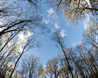 Forest. Treetop in the forest and blue sky, fisheye lens Stock Photo