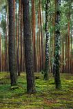 Forest. Sunny landscape of the colorful forest Stock Photos