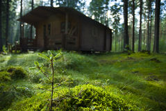 Forest. A picture of a small fir sapling, growing in front of a run-down shack in the forest Royalty Free Stock Photos
