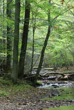 In the forest. Catoctin Mountain State Park. Maryland Royalty Free Stock Photos