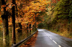 Forest. Road Stock Images