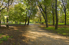 Forest. Autumn park. The city of Taganrog. The Rostov area. Russia Stock Photography
