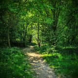 Forest. A dreamy path in the forest stock photos