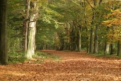 Forest. Autumn in a dutch forest Stock Photography