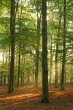 Forest. Beautiful morning sun shining in the forest Stock Images