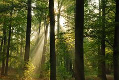 Forest. Beautiful morning sun shining in the forest Royalty Free Stock Photography