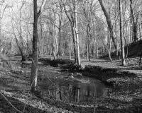 黑Forest#1 图库摄影