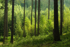 Forest 41 Stock Photo