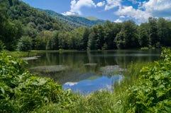 Forest湖 图库摄影