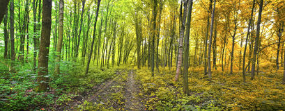 Free Forest Stock Photography - 44551552