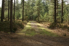 Forest. A pleasant forest scene in Dorset Royalty Free Stock Image