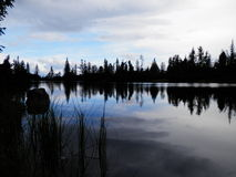 Forest湖 免版税库存照片
