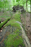 Forest. Mossy trunk in a forest Stock Images