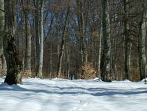 Forest. At winter Stock Photography