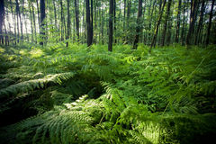 Forest. Taken in the the national park Eifel in NRW, Germany Stock Images