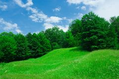 Forest. Landscape with forest and grassfield under blue sky Stock Photo