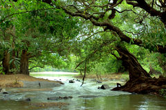 Forest. Area with river flowing between stock image