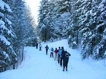 Through the forest!. Ski class follows leader through forest Royalty Free Stock Photo