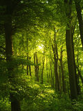Forest. Green forest with alot of trees and wild life Stock Photo