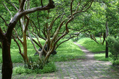 Into the forest. Open path to a vegetation area Stock Images