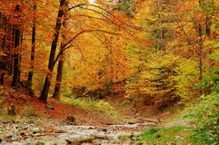 Free Forest Stock Photography - 6538352