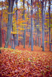 Forest Royalty Free Stock Photos