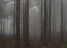 FOREST. In the fog royalty free stock photography