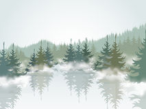Forest3 Fotografia de Stock