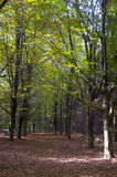 Forest. Path in early autumn Stock Images