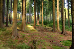 Forest. A view of sunlight filtering through overhead leaves in a German forest royalty free stock photos
