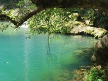 Forest湖 库存照片