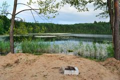 Forest湖 免版税图库摄影