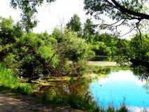 Forest湖 免版税库存图片