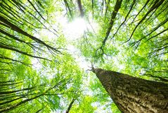 Free Forest Royalty Free Stock Image - 9371916