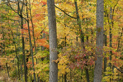 Forest ablaze with color. Stock Photos