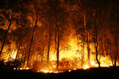 Forest Ablaze at Night. A bushfire burning orange and red at night royalty free stock photo