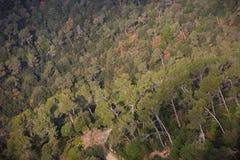 Forest From Above Imagen de archivo
