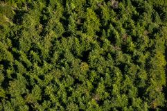 Forest from above. Aerial view of a forest in Canada Stock Images